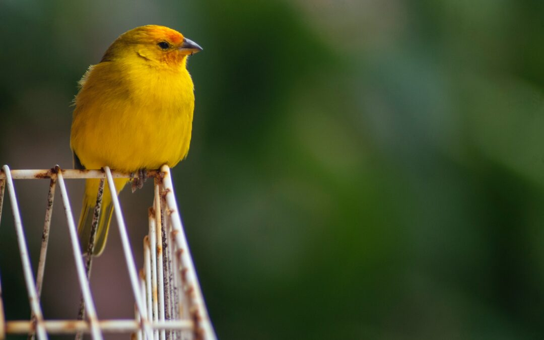 When It Comes to Your Health, Your Penis May Be the Canary in the Coal Mine